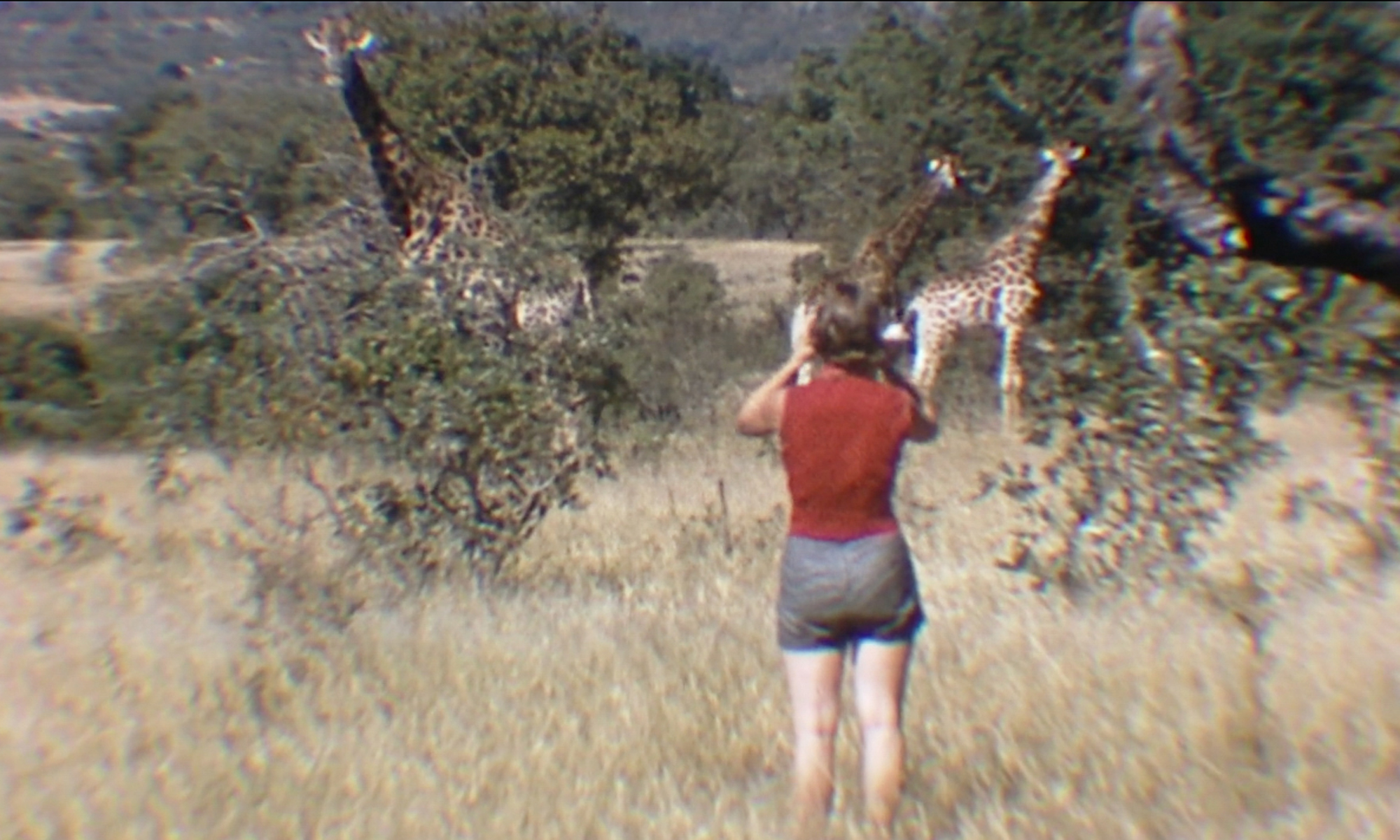 documentary-woman-who-loves-giraffes